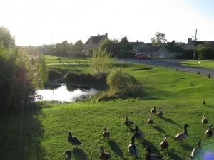 Ducklington duck pond