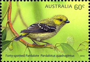 Forty-spotted-Pardalote-Pardalotus-quadragintus small
