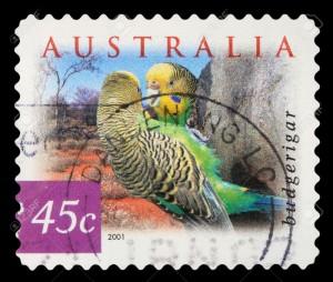 Stamp-printed-in-Australia-shows-Budgerigar-Melopsittacus-Undulatus-Common-Pet-Parakeet-Parrot-123rf com