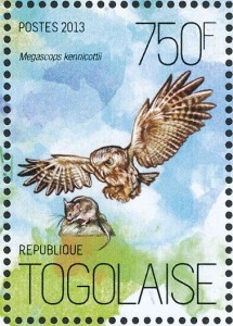 western-screech-owl-stamp-www-pinterest-com