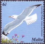 Larus michahellis birds on stamps com