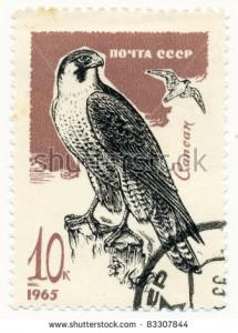 Peregrine Falcon USSR www shutterstock com