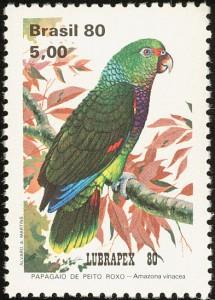 Amazona vinacea www birdtheme org