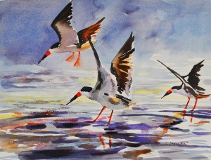 Black Skimmers painting © Julianne Felton