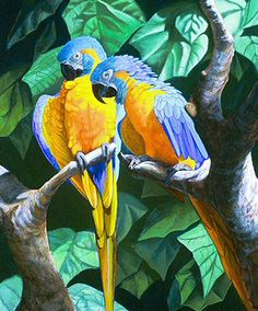 Blue-throated Macaw artwork www pinterist com