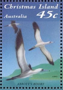Abbott's Booby www birdtheme org