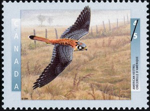 www canadianpostagestamps ca american-kestrel-canada-stamp